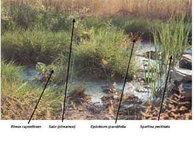 Test area in first vertical sub-surface flow wetlands cell where plants can be examined for tolerance of high metal concentrations