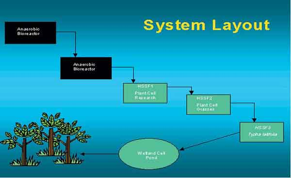 schematic of system layout showing effluent flow path
