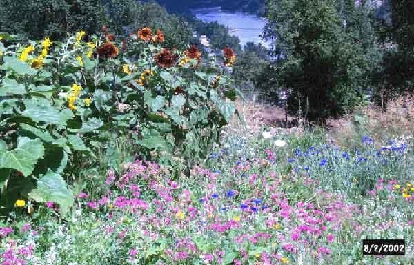 wild flowers on site